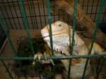 Adoptable Reptiles