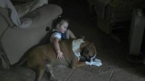 Beloved Boxer ~help find her way home