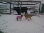 valentine and wheaty in the snow with Nestle
