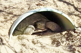 tortoise in door way