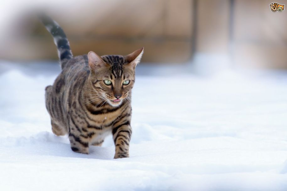 Cats winter