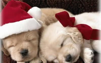 puppy holidays