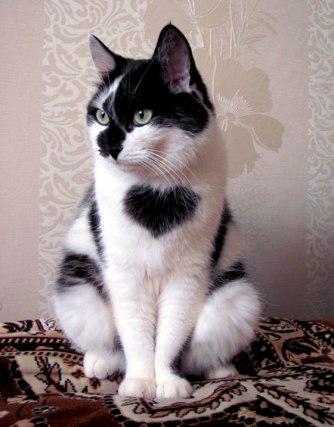 cat heart 1